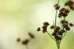Plantilla verde del prado de la primavera Foto de archivo libre de regalías