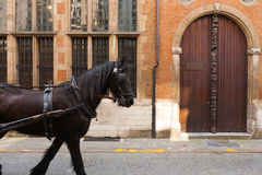 Plantin Moretus Museum Side Door Horse Royalty Free Stock Images