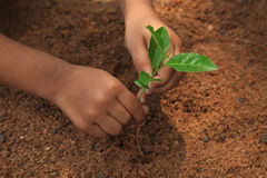 Planting Royalty Free Stock Image