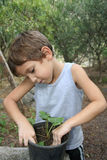 Planting. Awareness learning Royalty Free Stock Image