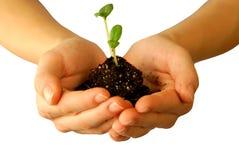 Planting Royalty Free Stock Photo