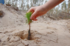 planting royalty-vrije stock afbeelding