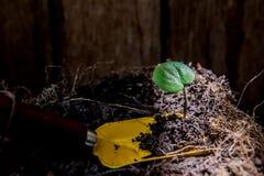 planting stock fotografie