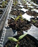 planting stock foto