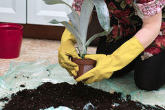 Planting A Flower. Royalty Free Stock Photos