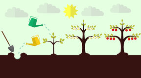Planting apple trees flat  Stock Images