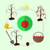 Planting apple trees flat  Stock Photo