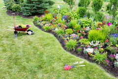 Planting a beautfiul colorful celosia flowerbed. High angle view from a distance of a wheelbarrow standing on a green lawn , alongside a manicured flowerbed Royalty Free Stock Photo