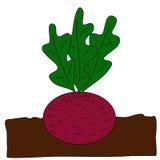 Planting beet. Beet grow underground. Vector cartoon flat illustration Royalty Free Stock Photography