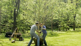 Planting birch tree Stock Images