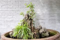 Planting Bonsai with rock in vase stock photos
