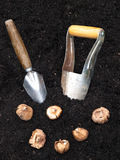 Planting Bulbs Stock Photo