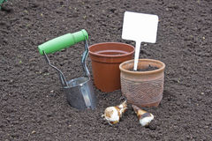 Planting bulbs daffodils holding a sign Stock Photography