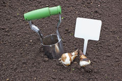 Planting bulbs daffodils holding a sign. Planting bulbs daffodils in cultivated land holding a sign Stock Image