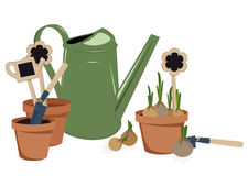 Planting bulbs in pots Royalty Free Stock Image