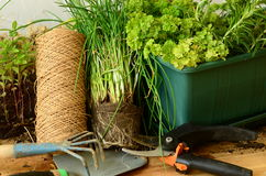 Planting of chives with gardening tools (trowel, rake and gardening scissors). Planting of chives with gardening tools Stock Photography