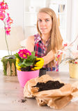 Planting colorfull flower in a flowerpot Stock Photos