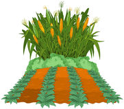Planting corn stock illustration