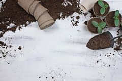 Planting Cucumber Seeds and Seedlings. Cucumber seedling plants with gardening tools, seeds, seedling peat pots and soil on a white wooden table. Image shot from Stock Images