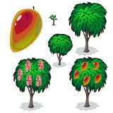 Planting and cultivation of tree pear. Vector Royalty Free Stock Photos