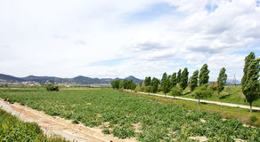 Planting in the Delta del Llobregat Stock Image