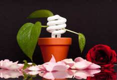Planting Energy Royalty Free Stock Photography
