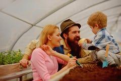 planting Familie die in Serre planten het planten van bloemen in oranjerie moedervader en zoon die in landbouwbedrijf planten royalty-vrije stock afbeelding