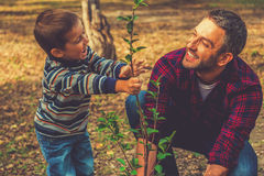 Planting a family tree. Happy young men planting a tree while his little son helping him royalty free stock photos