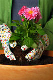 Planting a flower. Into a flower pot stock images