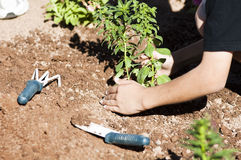 Planting a flower garden. Children plant a flower garden as a community activity Stock Photos