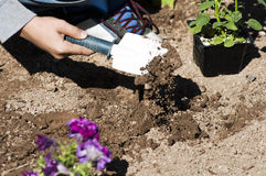 Planting a flower garden. Children plant a flower garden as a community activity Royalty Free Stock Images