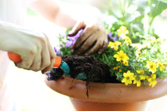 Planting flower garden Royalty Free Stock Image