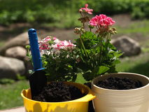 Planting the flowers Royalty Free Stock Photos