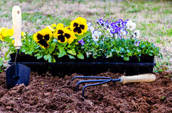 Planting Flowers Royalty Free Stock Image