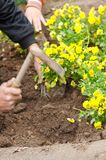 Planting flowers. Hands gardening with digging tool stock photos