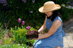 Planting Flowers Royalty Free Stock Photos