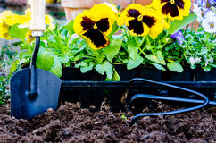 Planting Flowers Closeup Royalty Free Stock Images