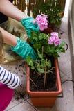 Planting Flowers Stock Photo