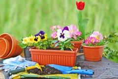 Planting flowers, flower pots, potting soil, trowel, work gloves and plants Stock Photos