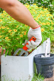 Planting Flowers in a garden.  Royalty Free Stock Photography