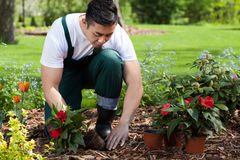 Planting flowers in a garden. Planting flowers in a beautiful green garden Stock Image