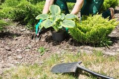 Planting flowers in the garden Stock Photo