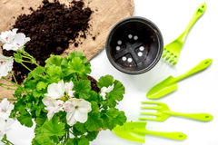Planting flowers in garden with green instruments and ground on white background top view. Planting flowers in garden with green instruments and ground on white Stock Image