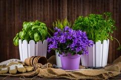 Planting flowers royalty free stock photos