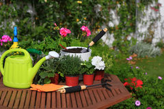 Planting flowers with garden tools ,various flowers and herbs in. Flower pots Royalty Free Stock Images