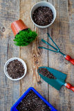 Planting flowers. Gardening tools and pots with soil on wooden background top view Royalty Free Stock Image