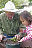 Planting flowers with Grandpa Stock Images