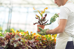 Planting flowers in greenhouse Royalty Free Stock Photography