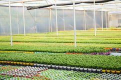 Planting flowers greenhouses stock images
