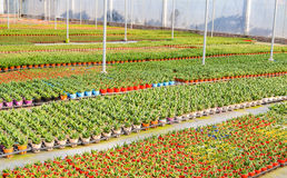 Planting flowers greenhouses stock photography
